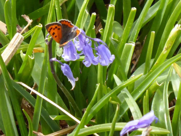 small copper 2
